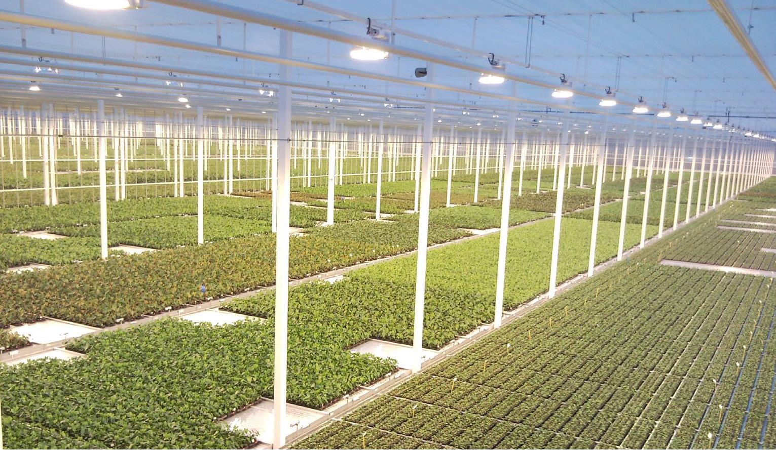 Greenhouses in Varna, Eurodite