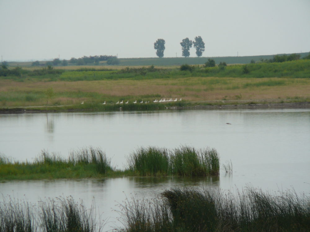 Flood plain Restoration Danube